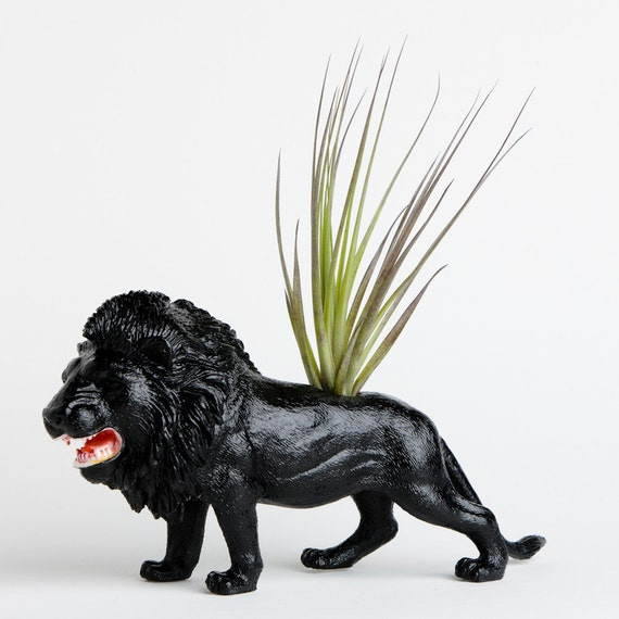 Lion Planter with Air Plant Room Decor, College Dorm Animal Ornament, Black Safari Animal, Geekery