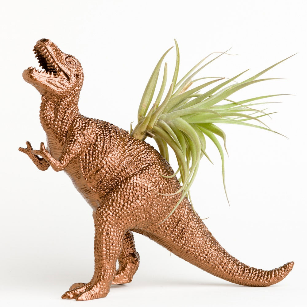T Rex Dinosaur Planter With Air Plant Dorm Room Geekery