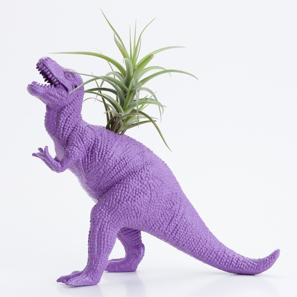 Dinosaur Planter With Air Plant Dorm Room Geekery By Modern333