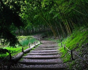 Bamboo Path - 8 x 12 Photographic Print