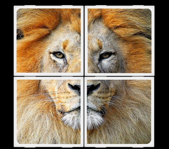 King of the Jungle - Ceramic Coasters Set