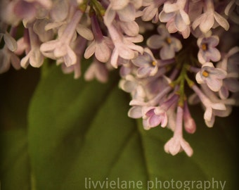 Flower photography - Your Love - 5 x 5 fine art shabby chic home decor - lilac soft purple