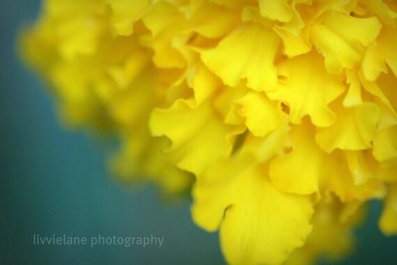 Marigold - Fine Art Flower Photography - 11x14 - Metallic paper - floral wall art home decor - mustard yellow sage