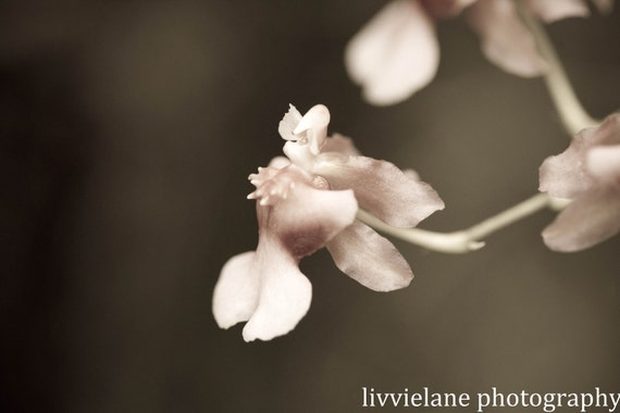 Orchid photograph - She Will Be Loved - 8 x 12 - blush pink and gray fine art flower home decor