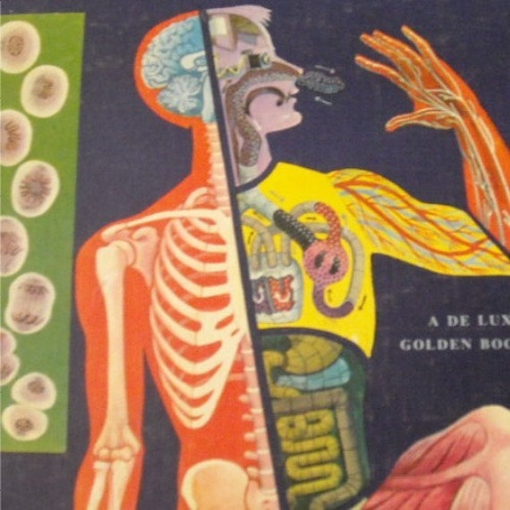 RESERVED FOR BROWNCOATV, vintage 50s children's science book, the human body, what it is and how it works, a deluxe golden book with amazing full-colour anatomy illustrations