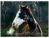 Early Morning Blues, Blue Eyed Horse Blowing Steam, Photo
