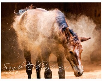 Shake It Baby, Shake It, Equine Photography,  Foal Shaking off Dust