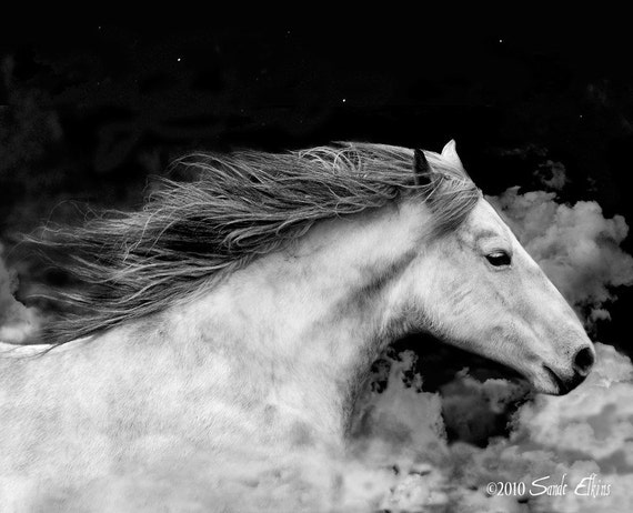 If I Could Fly, fine art photographic equine print