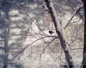 Solitary in the Snow, Bird, Winter, Snowing, Fine Art, Home Decor, 8x10 Print - HelenMPhotography