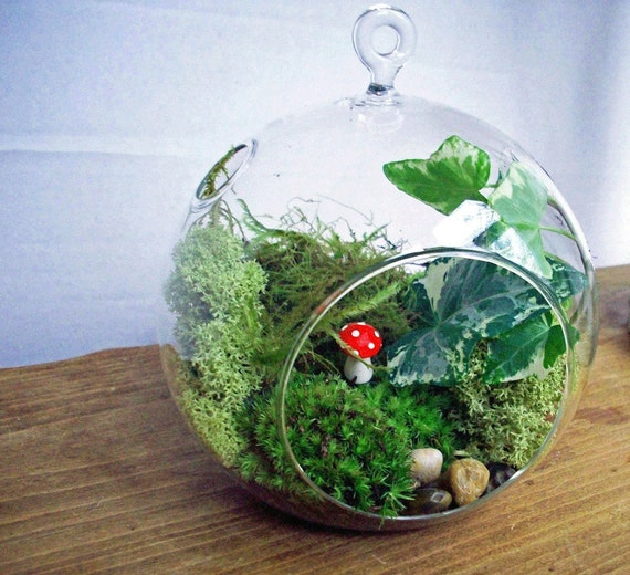 Handblown Glass Orb Moss Terrarium Kit
