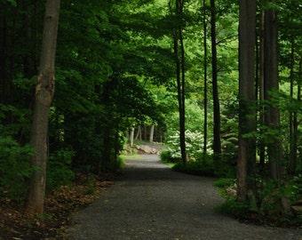 Enchanted Cottage Woods