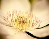 Flower photo - Sun Worshipper - 8x10 Fine Art Print - golden dusty rose and yellow soft dreamy flower image