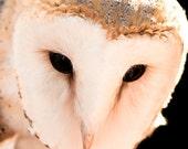 Halloween owl photo - Hoo are you - 8x8 nature photography art image fall autumn