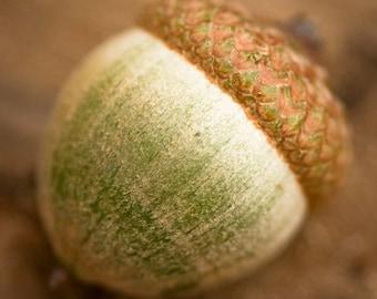Acorn Photo - Mighty Acorn - 8x8 Fine Art Print - modern neutral autumn fall home decor green brown
