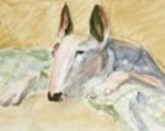 At Rest study- Bull Terrier