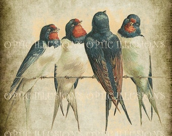 Printable Digital Picture - INSTANT DOWNLOAD - Vintage Bird Illustrations on Old Paper - BIRD  02 - 8 x 10 inches in size-3.50