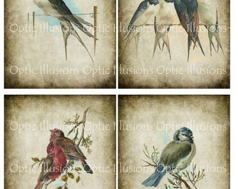 Vintage Bird Illustrations - INSTANT DOWNLOAD - Set of 12 Images - Each Image is 5 x 7 Inches - You Save 35% - Cards, Scrapbooking - 6.75