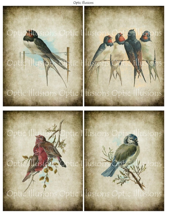 Vintage Bird Illustrations - INSTANT DOWNLOAD - Set of 12 Images - Each Image is 4 x 5 Inches - You Save 35% - Cards, Scrapbooking6.75