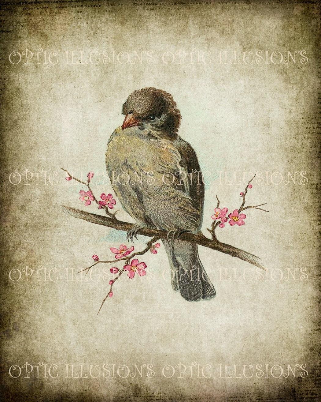 Printable Digital Picture Instant Download Vintage Bird
