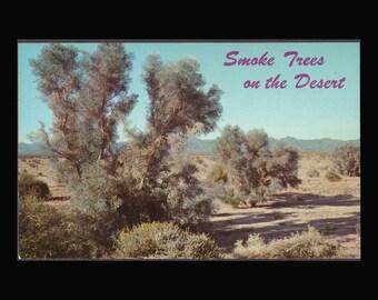Two Vintage Photographic Postcard Desert Scenes Smoke Trees and Ten Sleep Canyon
