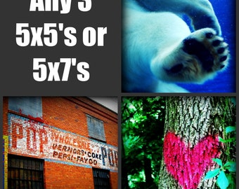 Any 3 5x5 or 5x7 Prints - You Choose