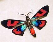 WOW METALLIC BLUE RED FRAMED DAY FLYING MOTH 284v