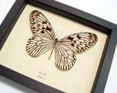 WHITE RICE PAPER IDEA IDEA REAL FRAMED BUTTERFLY 7872
