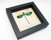 Wedding Day Gift Real Emerald Green Dragonfly Damselfly Display 7797