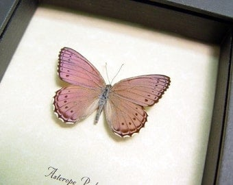 Real Framed Shimmery Butterfly Conservation Quality Display 131f