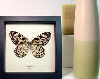 Wedding Gift Real Framed Rice Paper Idea Leuconoe Butterfly 150