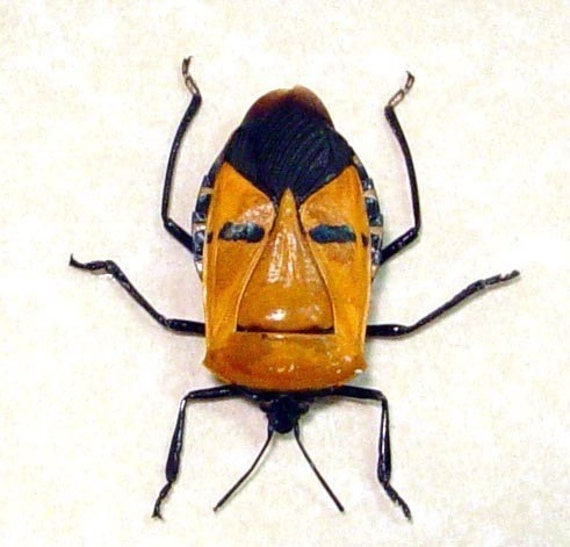 Great Birthday Gift Real Framed Man Face Beetle 2220