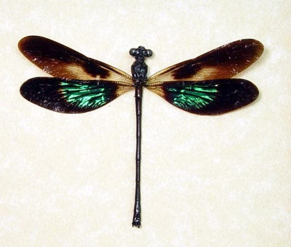 Dad's & Grad's Gift Real Framed Metallic Green Patch Damselfly Dragonfly 7709
