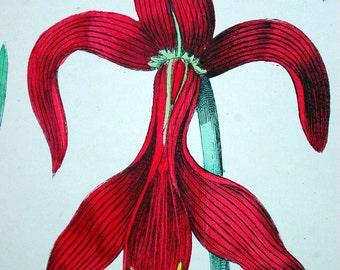 1881 Vintage Botanical Print of Flowers (24) - Handcolored
