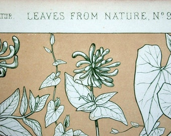 1865 Simply Stunning Antique Chromolithograph from the Grammar of Ornament by Owen Jones. Leaves from Nature No. 9. Plate 99