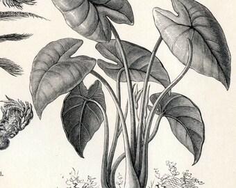 1897 Vintage Botanical Print of Food Plants. No. 1. - Engraving