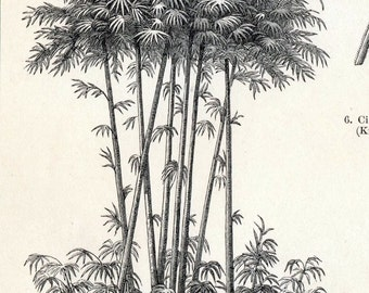 1897 Vintage Botanical Print of Food Plants. No. 3. - Engraving