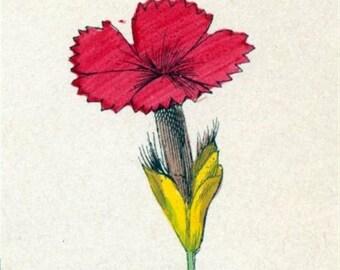 1881 Vintage Botanical Print Handcolored (34)