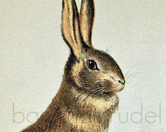 1892 Original Chromolithograph of Rabbits