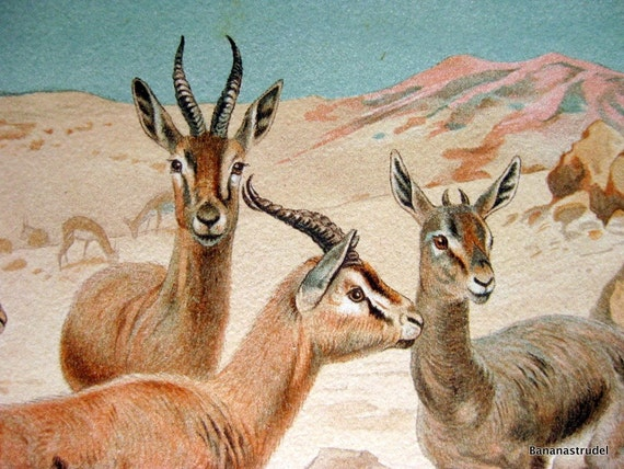 Antique Chromolithograph of Dorcas Gazelle. From Lydekker's New Natural History