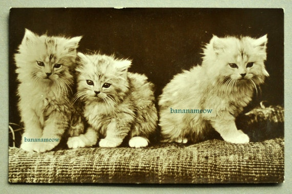 1915 Photo Postcard of Adorable Kittens