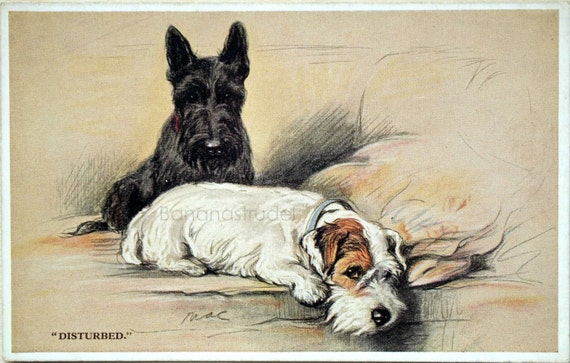 Early 1900s Valentines Postcard of Two Dogs. Disturbed.
