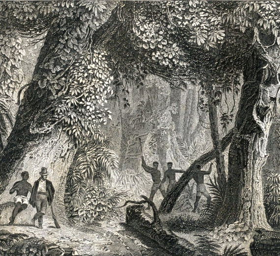 Antique Print of Caves, Grottos, Forests, and Other Nature Scenes. Plate 51 - 1860 Steel Engraving
