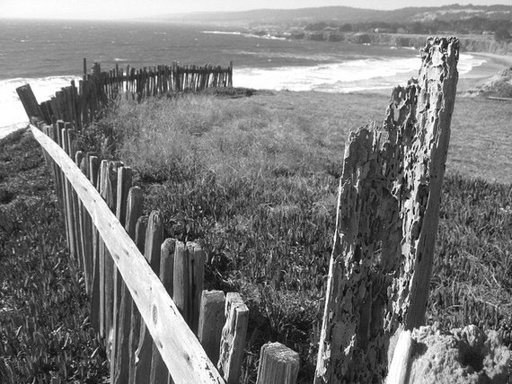 The Fence- The Sea Ranch, Ca  8 x 10 Photo Print