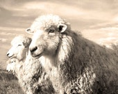 Sheep/Lamb  Good,Better,Best. Great baby shower gift or any mom.her Available aslight sepia or black and white