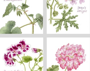 Small Greeting Cards PELARGONIUMS - Set of 8