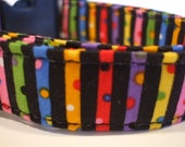 Collars With Curb Appeal - Celebrate - MED