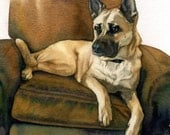 Belgan Shepherd Fine Art Print 8 x 10