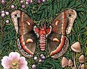 Cecropia Moth Art Print Reproduction - giardino