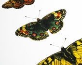 Three Butterflies Original Art Print - giardino