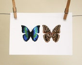 ultimate morpho butterfly print